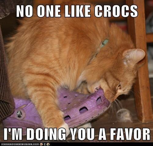 wtf-crocs-cat