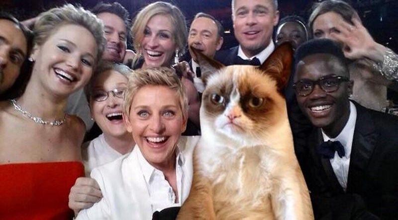 selfie grumpy cat