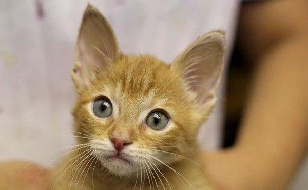rio-chirurgie-esthetique-chiens-chat-interdite