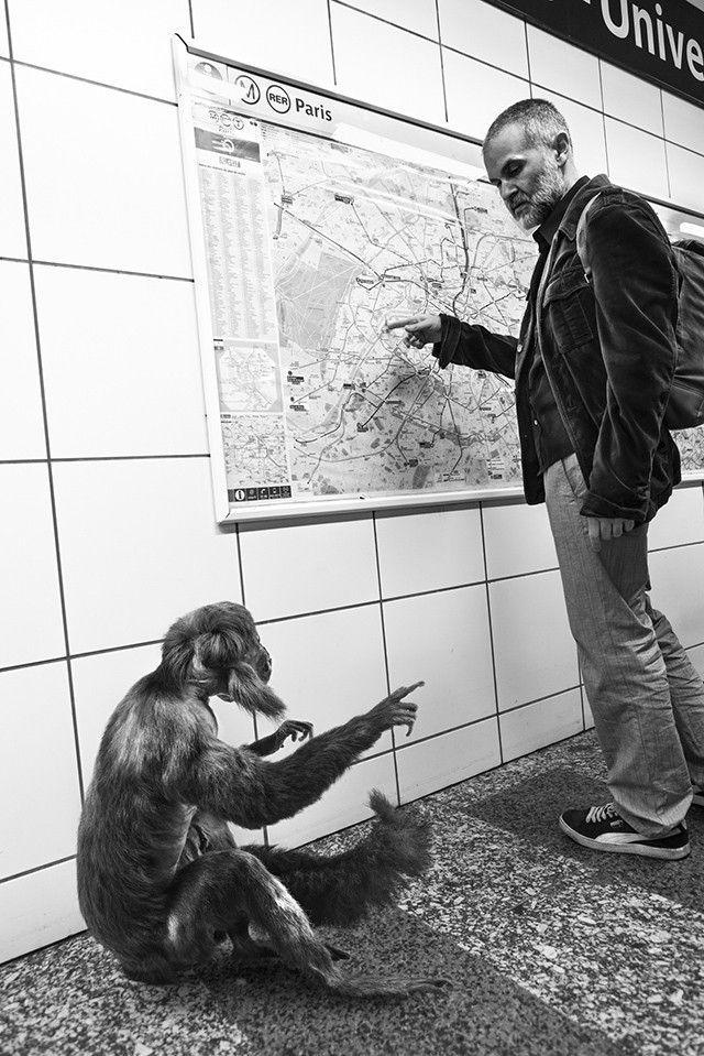 singe-métro-mendiant