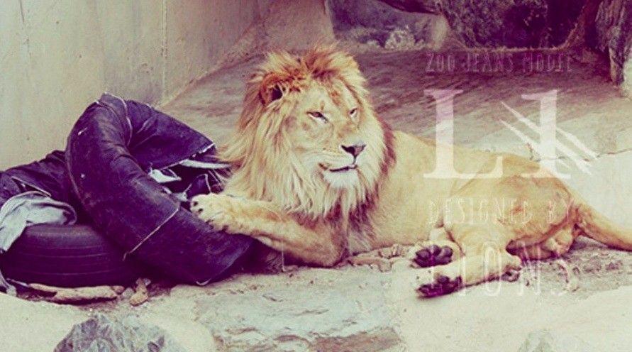zoo jeans lion