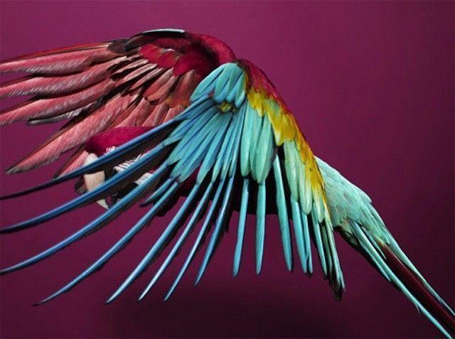 solve-sundsbo-art-photographie-perroquet