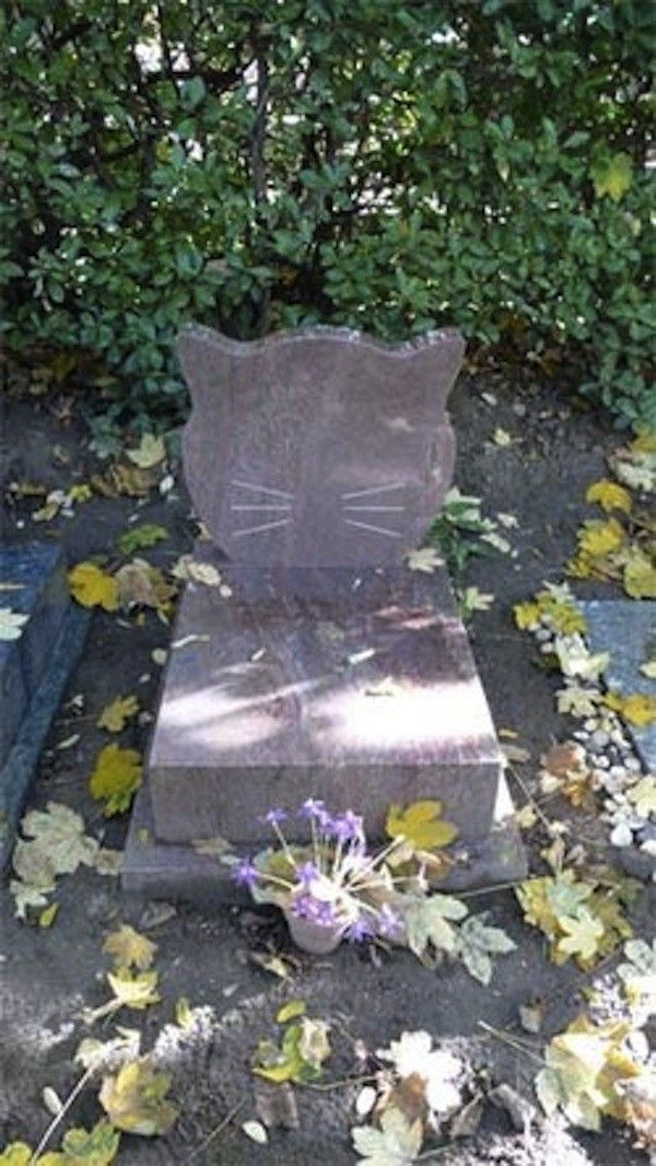 tombe chat