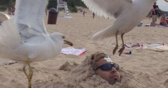 oiseau rien à foutre