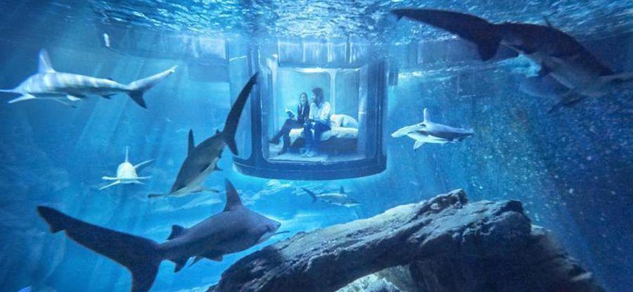 chambre aquarium requins