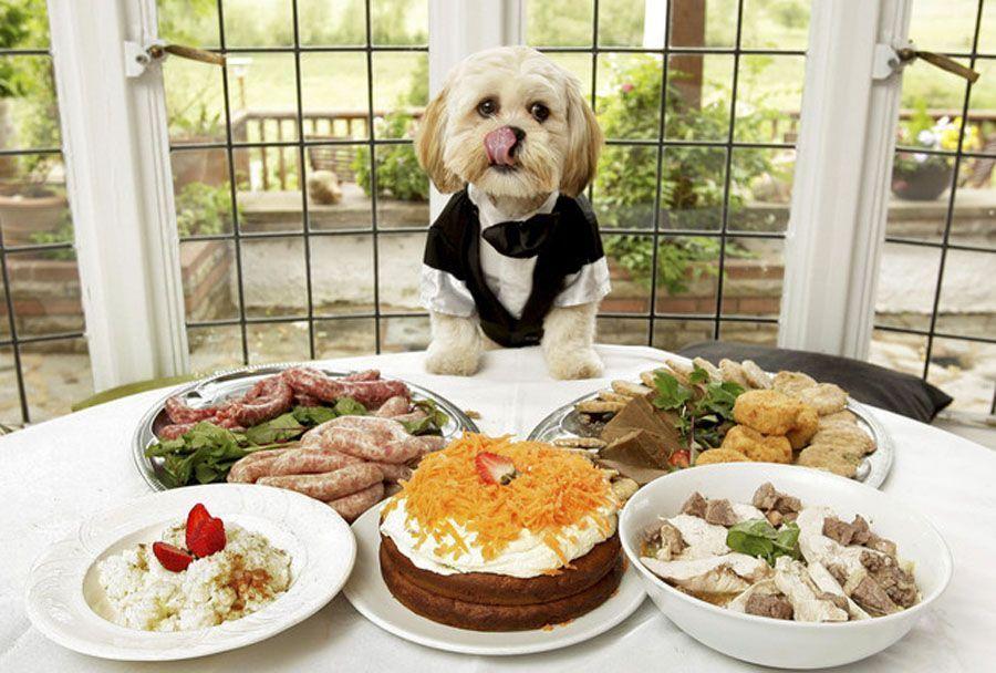 brunchs pour chiens