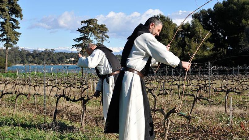 moines vignobles