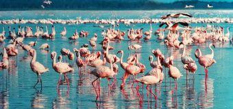 Pars au Kenya pour des paysages démentiels