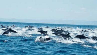 Photo of México alista alza de aranceles a importaciones de Estados Unidos por caso del atún