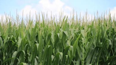 Photo of México rechaza discutir propuesta agrícola de Estados Unidos