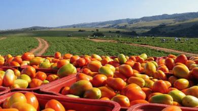 Photo of La propuesta agrícola de Estados Unidos desarmaría al TLCAN: Guajardo
