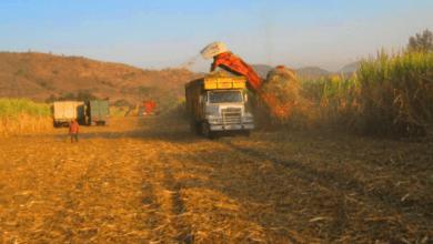 Photo of México abastece 43% de las importaciones de azúcar de EE. UU: Iqom