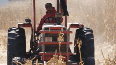 Photo of México organiza visitas a Rusia, Nueva Zelanda y Brasil para diversificar agroalimentos