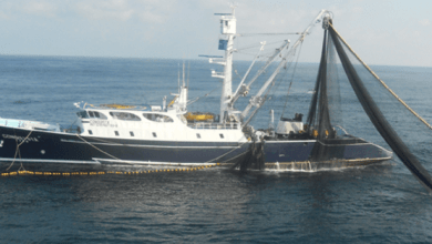 Photo of Grupo Herdez cuenta con ocho buques atuneros que pescan en el Pacífico