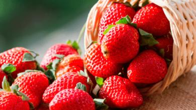Photo of México exportó fresas a EEUU por US 643 millones en 2017; oportunidad de negocio