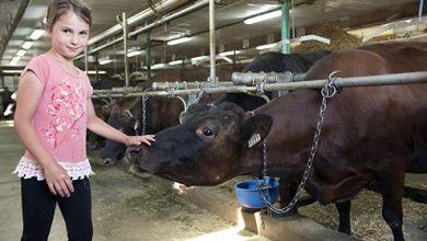 Photo of Canadá protege a sus productores de leche, pollo, pavo y huevo
