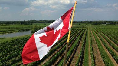 Photo of Estados Unidos analiza restricciones de vino en Ontario, Canadá
