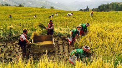 Photo of China aplica cuatro tipos de normas: OMC