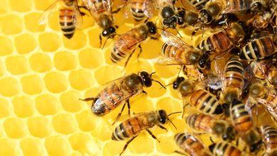 Photo of Walmart vende miel de Yucatán en 170 tiendas