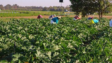 Photo of México quiere aumentar la producción de fertilizantes