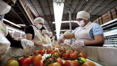 Photo of Cuotas al tomate costarán US$ 350 millones al año