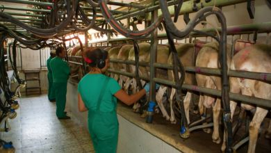 Photo of México sube importaciones de queso de EU a pesar de represalias