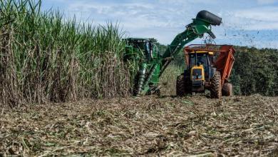 Photo of La UE abrirá cupo de 180,00 toneladas de azúcar de Brasil