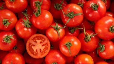 Photo of Márquez acusa al Departamento de Comercio por tomates