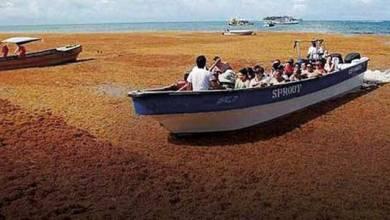 Photo of La Semar construye 4 barcos recolectores de sargazo
