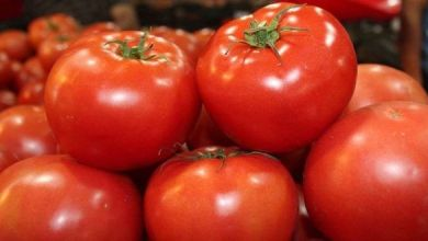 Photo of Cayeron exportaciones de tomates de México a EU