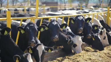 Photo of Certifican a plantas de leche de México para exportar a Centroamérica