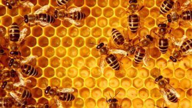 Photo of Empresa alemana compra 600 toneladas de miel mexicana