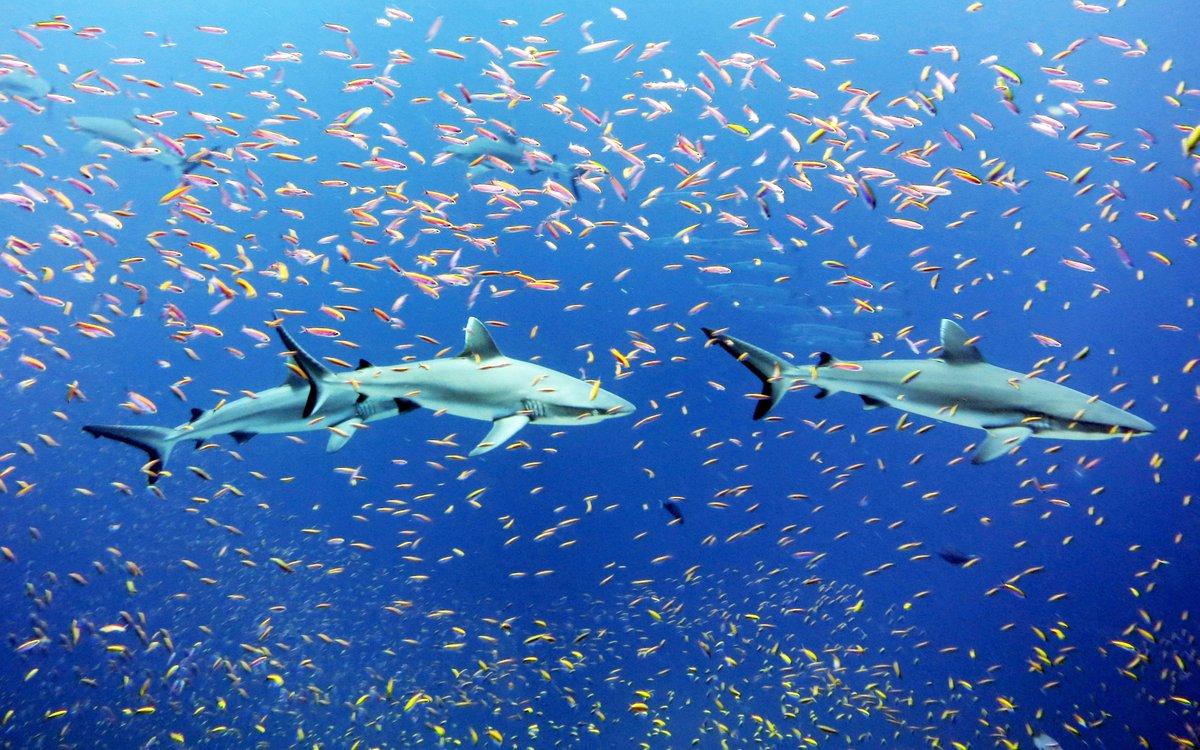 Las negociaciones sobre la pesca continúan avanzando en la OMC.