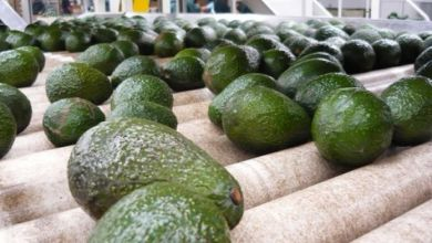 Photo of Los 10 mayores exportadores de aguacate del mundo