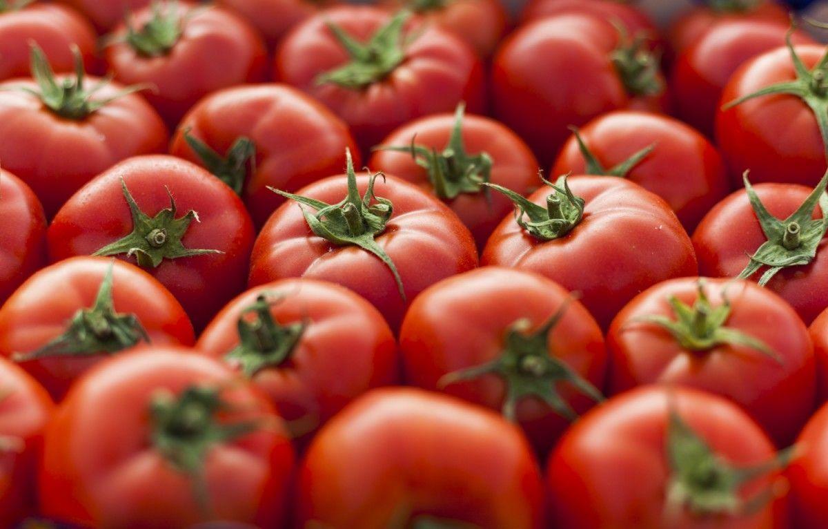Los tomates frescos importados de México se rigen por acuerdos de suspensión desde 1996.