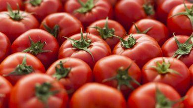 Photo of EU impondrá cuota antidumping a los tomates mexicanos