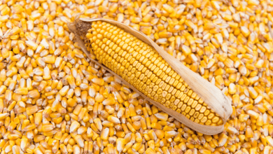 Imports of corn from Mexico from the United States fell 6% in the first quarter of 2020, to 3 million 435,000 tons.