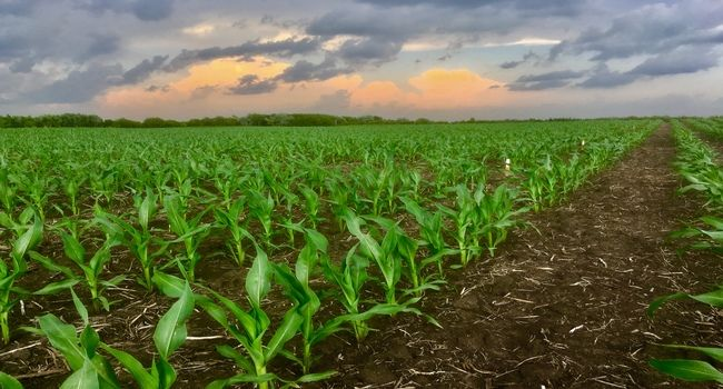 Mexico topped the list of the main destinations for US corn exports, with 6.8 million tons from October 2019 to March 2020.