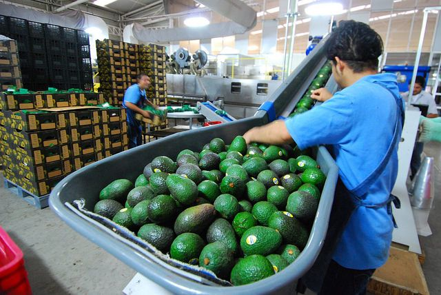 The top five avocado exporters to the United States are, in descending order: Mexico, Peru, Chile, the Dominican Republic, and Colombia.