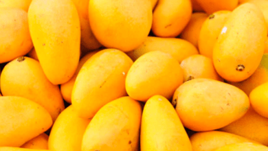 Mango exports from Mexico registered a growth of 7.1% year-on-year in the first semester of 200, to 201.4 million dollars, according to data from the Ministry of Agriculture.