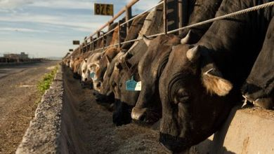 Photo of Beef exports: Mexico displaced Australia as the second largest supplier to the US