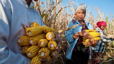 Photo of Food prices rise 5% year-on-year in September: FAO