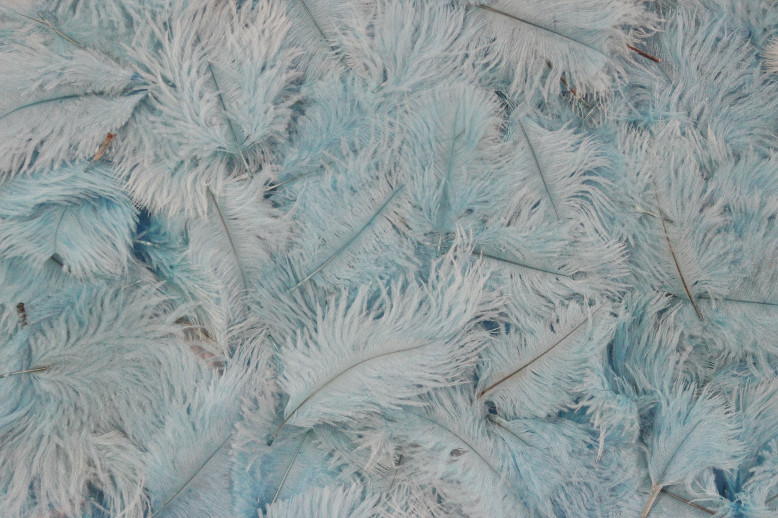 dyed-ostrich-feathers