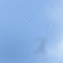 Cuerpos flotantes