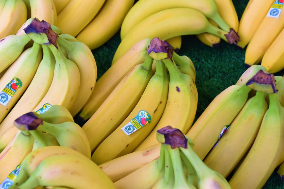 Bananas Are Useful For Your Well-being Yet It very well may Be Fluffy On Your Weight Too!