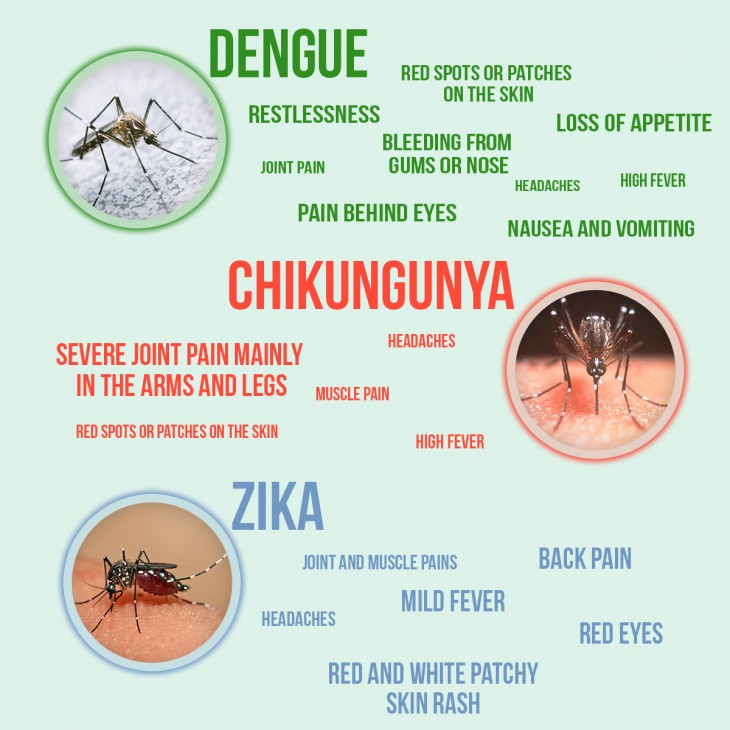 Image result for chikungunya rash
