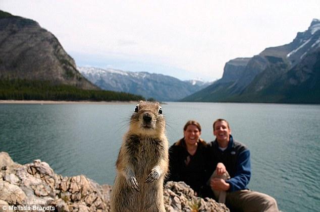 Melissa Brandt famous Bow Lake Squirrel Picture