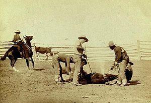branding-cattle