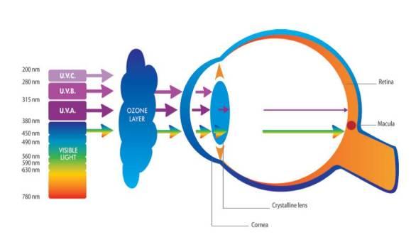 UV ışınları, farklı canlılar üzerindeki etkilerine ve karakteristik özelliklerine göre üçe ayrılır. UV-A, UV-B ve UV-C olarak üçe ayrılan UV ışınlarının en yaygın olanı UV-A'dır. UV-A ışınları dünyadaki UV ışınlarının %95'ini oluşturur. Ozon tabakasından geçip dünyaya ulaşabilen bu tür ışınlar cildimizi ve gözlerimizi her gün etkiler, göz merceğimize ve retinamıza kadar ulaşabilir. UV-B ışınlarının bir kısmı ozon tabakası tarafından emilebilir, fakat çocukların gözlerini olumsuz yönde etkileyebilir. Yetişkinlerde ise çoğunlukla göz merceği tarafından emilirler. Bu üç ışından en tehlikeli olan ise UV-C ışınlarıdır