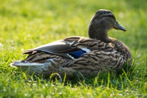 Sitting Ducks: When Employees Work from Home